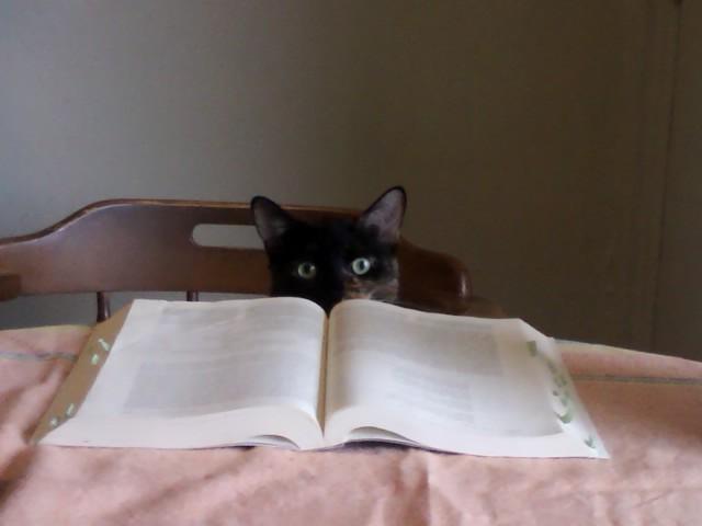 Leliana, Kitten of letters